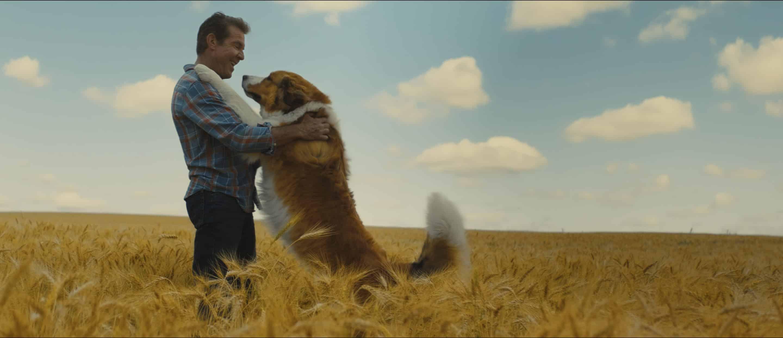 Universal Pictures divulga pôsteres e trailer do drama de Gail Mancuso, Juntos Para Sempre