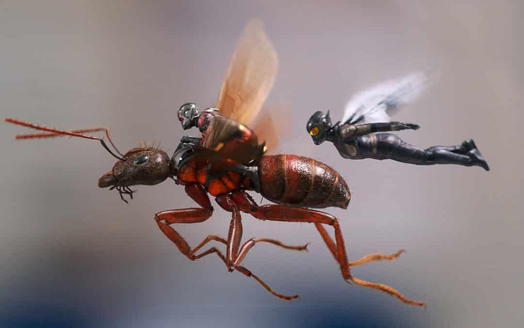 Homem Formiga e a Vespa – O Ultimato